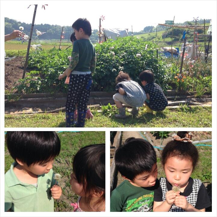 6月 芋の苗植え2