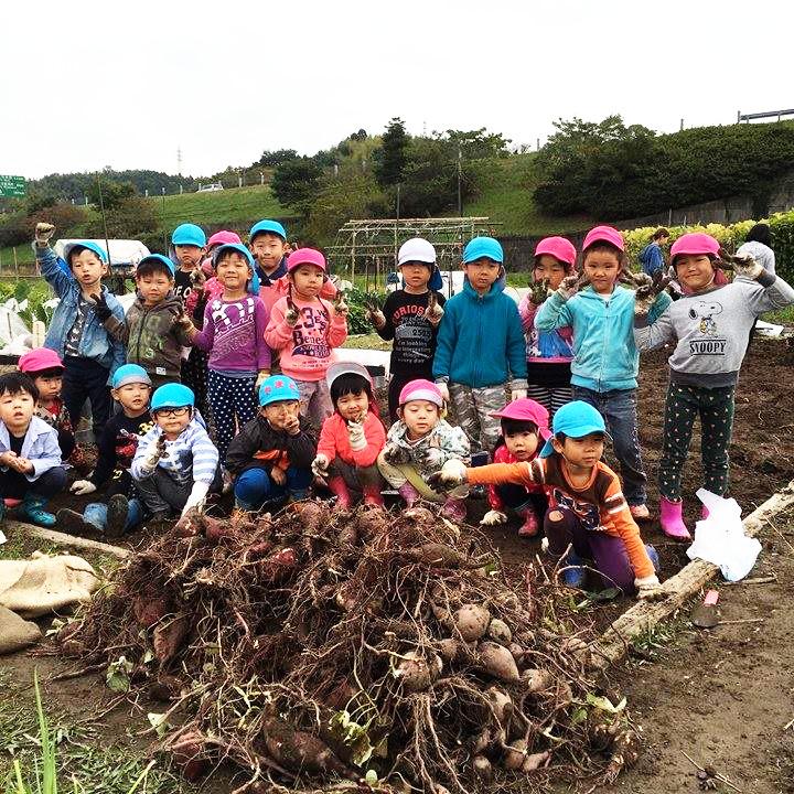 ☆お芋掘り☆認可保育所(みつよし園)1